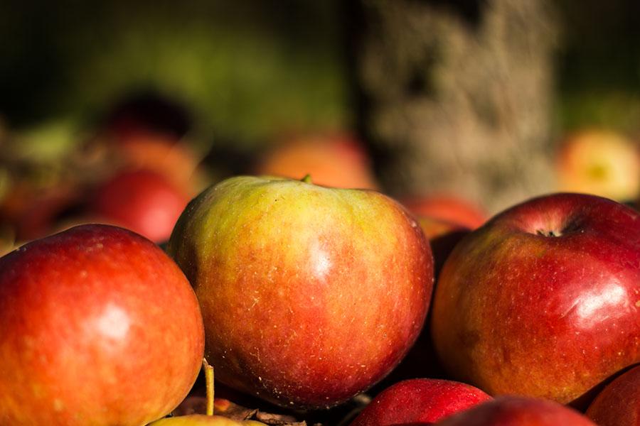 wir teilen die äpfel aus